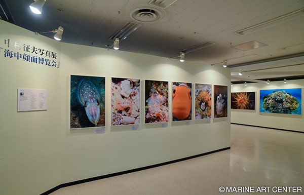 The Marine Diving Fair 2015 featured an exhibition of Ikuo Nakamura's photos. Everyone was enthralled by photographs that playful and powerful creatures.